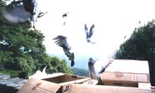 高尾山放鳩ピクニック