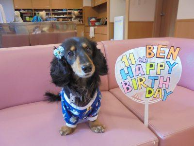 ベンが11歳の誕生日を迎えました。
