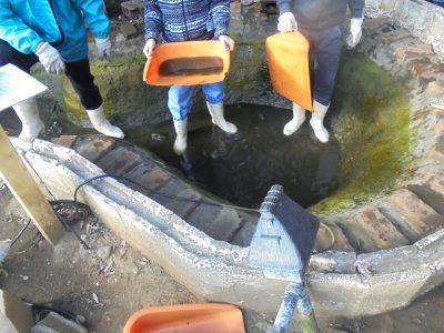 鯉の池を掃除しました!