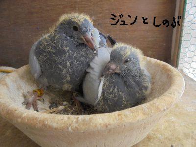 さらに2羽のヒナが生まれ、4羽のヒナが元気に育っています!